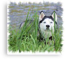 Skye- Blue Husky Canvas Print