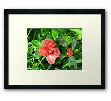 Peach azalea Framed Print
