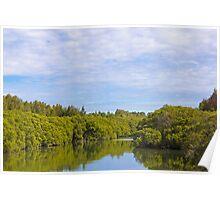 Homebush Bay mangroves Poster
