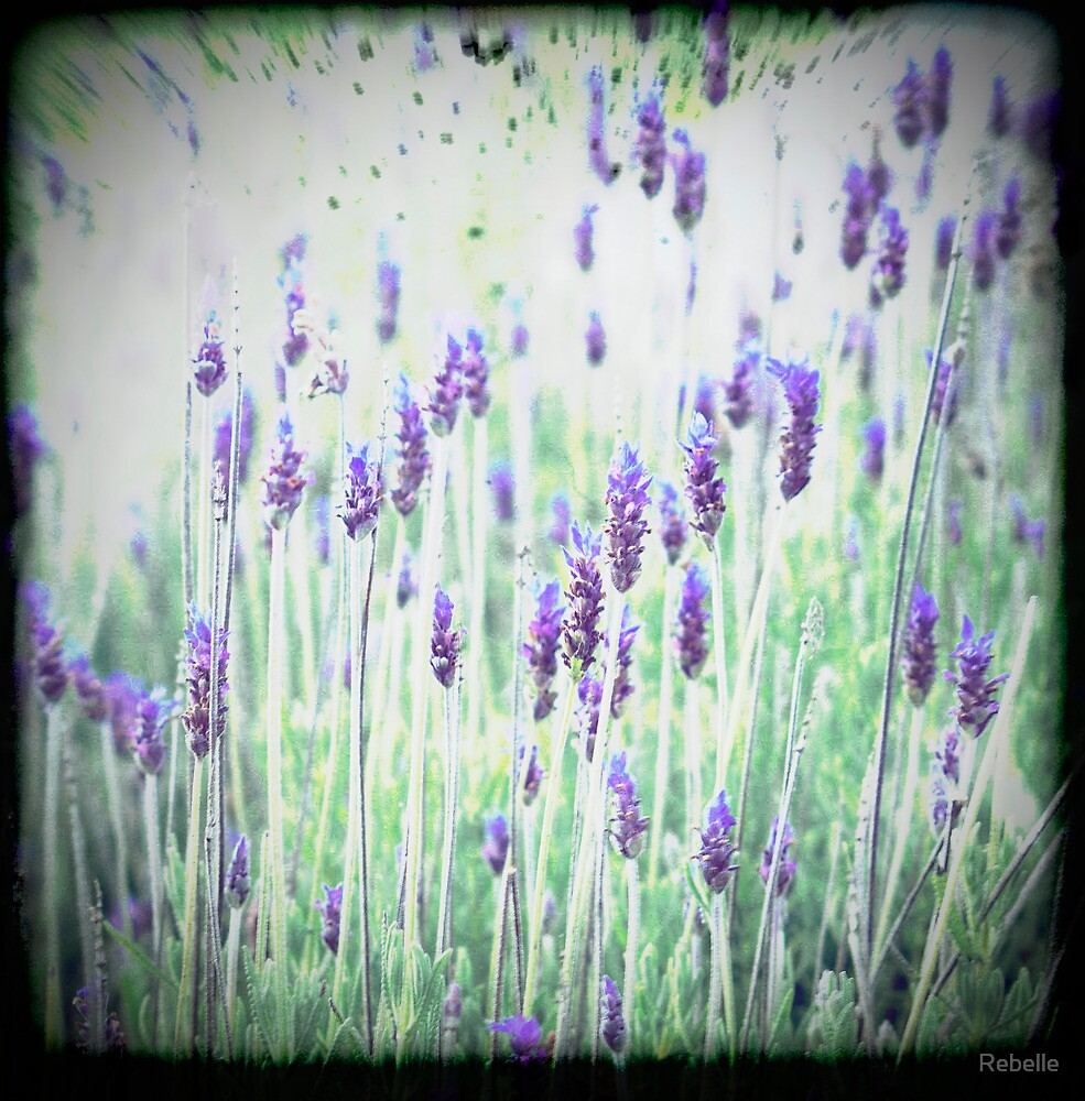 Lavender's Blue Dilly Dilly by Cathy  Walker