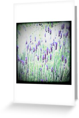 Lavender's Blue Dilly Dilly by Rebelle