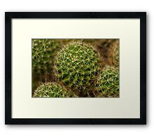 Points of view - cactus Framed Print