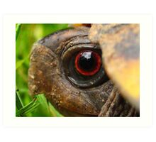 Box Turtle Macro  Art Print
