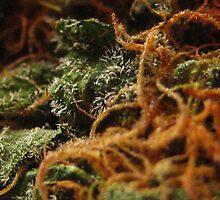 Marajuana Macro by hallucingenic