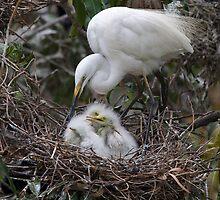 Feeding Intermediate Egret Family by Neil Bygrave (NATURELENS)