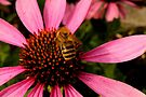 Flower Love to Bee by Jo Nijenhuis