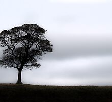 Negative Space by Neal Petts