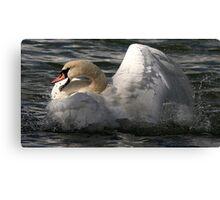 Raging Swan Canvas Print
