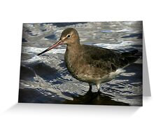 The Black Tailed Godwit Greeting Card