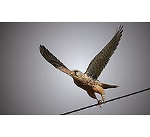 Going Off Line - Kestrel Photographic Print