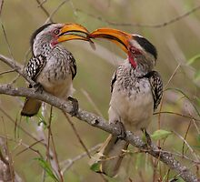 Hornbill Love by naturalnomad