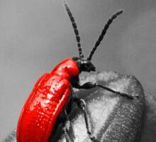 Bug A Boo Sticker
