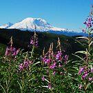 Summer at Mt. Rainier by Tori Snow