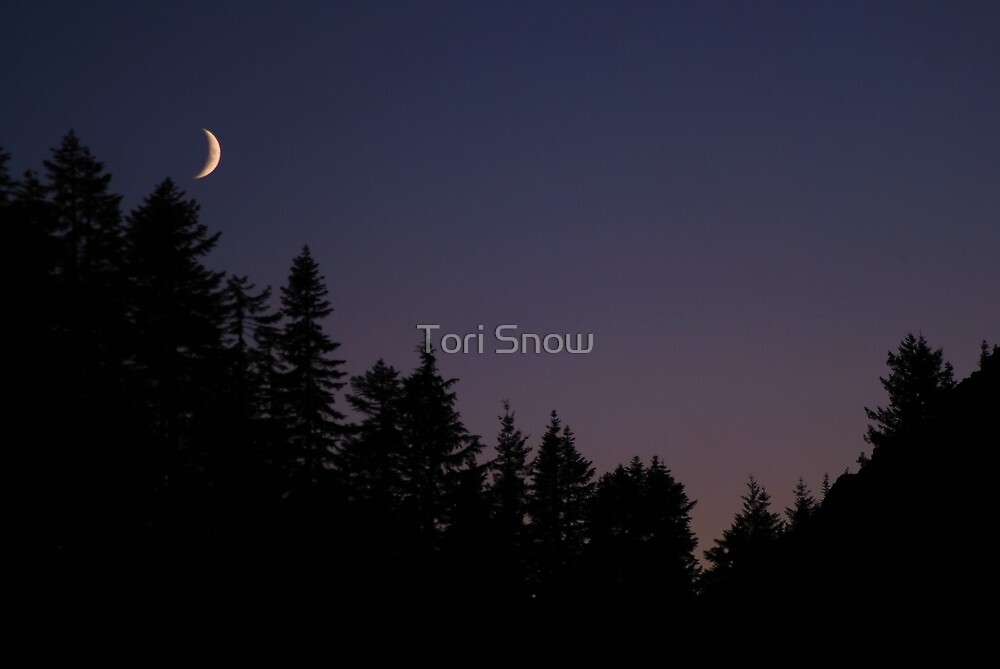 Late Evening  by Tori Snow