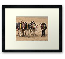 British Beach Donkey's Framed Print