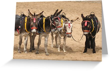 British Beach Donkey's by KMorral