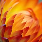 A Burst of Orange by Curtis  Sheppard