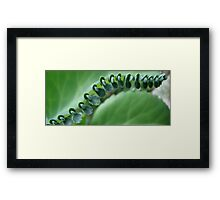 Butterfly Row Framed Print