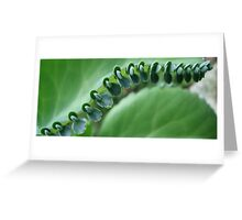 Butterfly Row Greeting Card