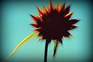 Summer inspirations by Joshua Greiner