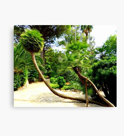 The Palms Of Alfabia..........................Majorca Canvas Print