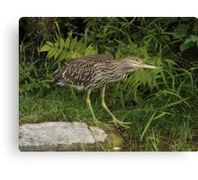 In awe of his surroundings Canvas Print