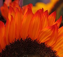Inflorescence by jules572
