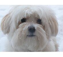 Winter Lola Photographic Print