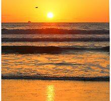 Sunrise /Sunset  by whiteygilroy