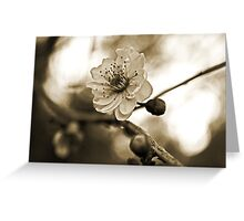Cherry Blossoms in Sepia #2 Greeting Card