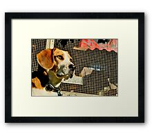 Louie - Lord of the Roost Framed Print