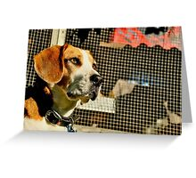 Louie - Lord of the Roost Greeting Card