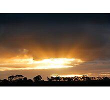 Tree Line Silhouette Photographic Print