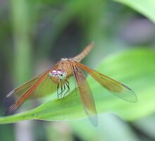 KL Butterfly Park - Angry Dragon 2 by jaypea7