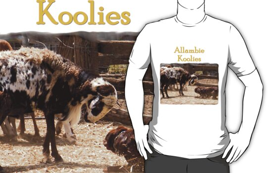 Allambie Koolies Number 2 by Koolie Club  of Australia