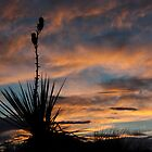 Yucca at Sunset by KDPhotos