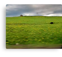 Drive By......Black Cow Canvas Print