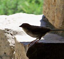 Bird by Charli McDonald