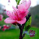 spring fling   by LoreLeft27