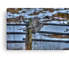 Hunting Great Grey Owl Raptor Winter Wildlife Canvas Print