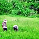 Two men in a rice paddy by TerraChild