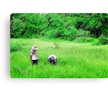 Two men in a rice paddy Canvas Print