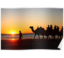 Camels at sunset, Broome WA Poster