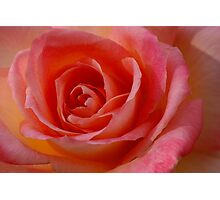 Rose Portrait Photographic Print
