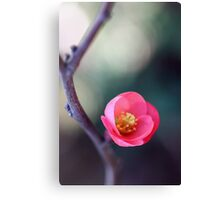 Just One Flower Canvas Print