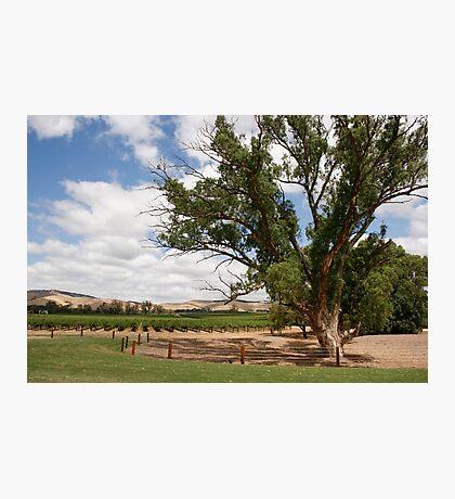 Barossa Valley Landscape Photographic Print