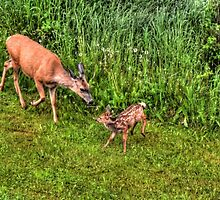 Instruction (Deer and Fawn) by Skye Ryan-Evans