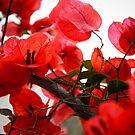 Ravishing red by Alexander Kok