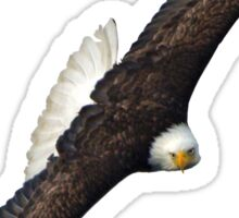 Eagle on the Turn Sticker