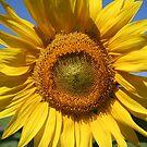 Good Day Sunshine by hjaynefoster